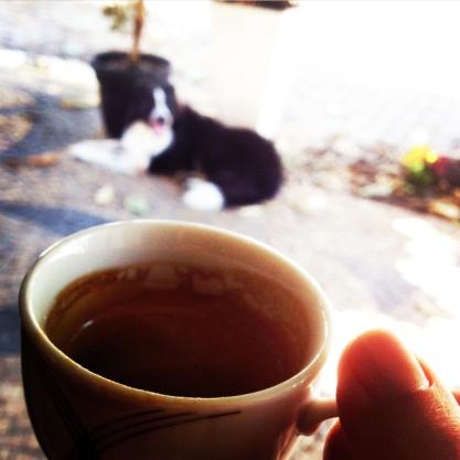 e adoro tomar um café com Chap. Às vezes ele não pode entrar, mas fica me esperando numa nice!